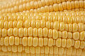 Free Ears Of Sweet Corn Royalty Free Stock Photos - 6067888