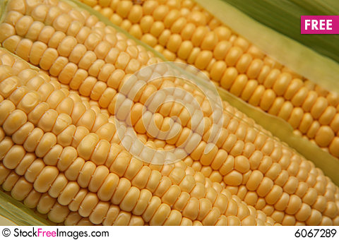 how to clean fresh corn on the cob