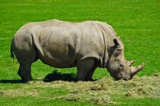 Free Big Rhinoceros Stock Photo - 6060130