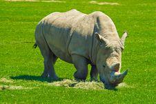 Free Big Rhinoceros Royalty Free Stock Photos - 6060328