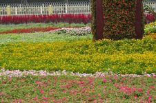 Free Flower Land Royalty Free Stock Photography - 6061077