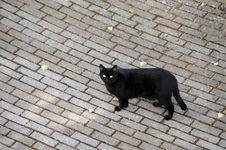 Free Black Cat Stock Photos - 6062113