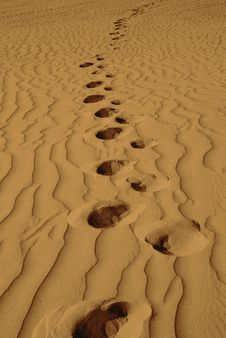 Free Lonely Footprints In The Sand-Vertical Stock Photos - 6062483
