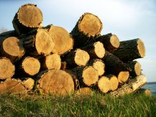 Free Pile Of Logs - Horizontal Royalty Free Stock Photography - 6062877