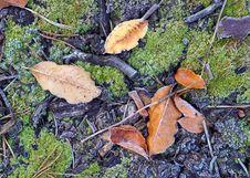 Autumn Theme Stock Photos