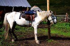 Free Horse Stock Photo - 6063960