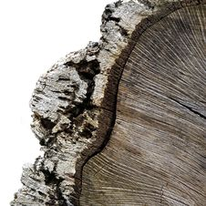 Free Crosscut Through Timber With Bark Isolated Royalty Free Stock Photos - 6064748