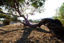 Free Old Tree Stock Photos - 6064963