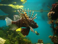 Free Fish. Stock Image - 6066671