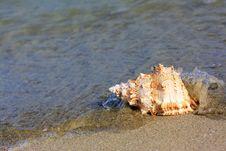Free Seashell At The Seashore Stock Image - 6067211