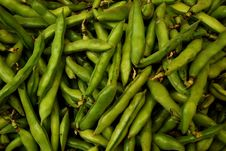 Free Organic Broad Beans Royalty Free Stock Photo - 6067245
