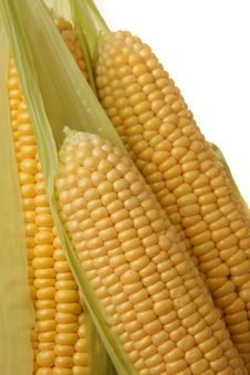 Free Ears Of Sweet Corn Royalty Free Stock Images - 6067589