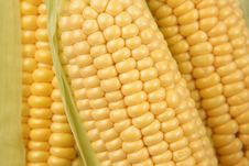 Free Ears Of Sweet Corn Stock Photos - 6067683