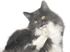 Free Grey Cat With Orange Eyes Stock Photos - 6067813