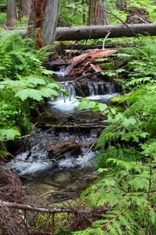 Forest Stream Waterfall Royalty Free Stock Image