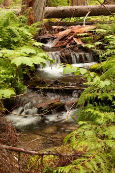 Free Forest Waterfall Stock Photos - 6067873