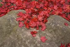 Free Maple Leaves On The Rock Royalty Free Stock Images - 6068229