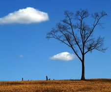Tombstones Under A Tree Royalty Free Stock Photo