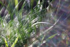 Free Spring Morning Grass Stock Photo - 60639100