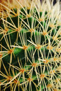 Free Cactus In Cameron Highlands Stock Photo - 6076730