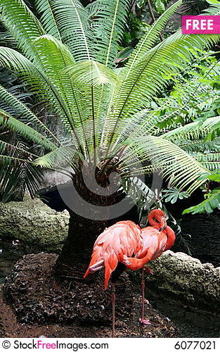 Free Flamingos Stock Image - 6077021
