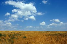 Free Wheat Field Royalty Free Stock Photos - 6070348