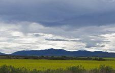 Free Oilseed Rape Fields Stock Images - 6072344