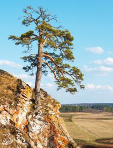 Free Lonely Tree Stock Photography - 6072352