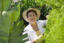 Free Gardening Royalty Free Stock Image - 6072426