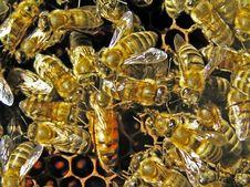 Free Uterus Among Bees. Stock Photo - 6073150