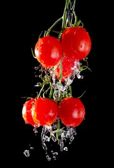 Flow Of Pourng Water On Tomato Bunch 2 Stock Photography
