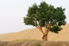 Free Camel, Tree And Desert Stock Photography - 6073852