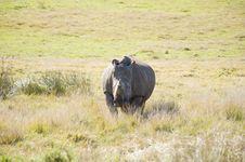 Free Healthy Rhino Stock Photography - 6074302