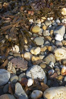 Rocky Beach With Seaweed Royalty Free Stock Image