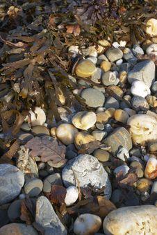 Rocky Beach With Seaweed