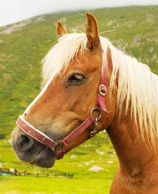 Free Brown Horse Portrait Royalty Free Stock Photos - 6075898