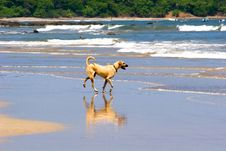 Free Yellow Dog On Beach Royalty Free Stock Photo - 6076135