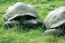 Free Turtles Stock Photo - 6076170
