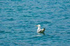 Free Seagull Stock Image - 6077081