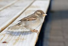 Free Sparrow. Stock Photos - 6077143