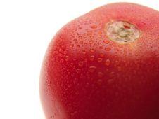 Free Dewy Tomato Stock Photos - 6077413