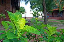 Free Foliage Landscape Stock Images - 6077884