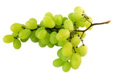 Free Appetizing Bunch Of Grapes Royalty Free Stock Images - 6077939
