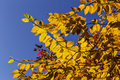 Free Fall Colors Royalty Free Stock Photo - 60781435