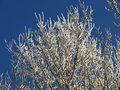 Free Hoarfrost Royalty Free Stock Images - 6085639