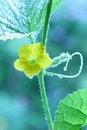Free Growing Green-C Royalty Free Stock Image - 6086976
