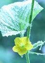 Free Growing Green-D Stock Photos - 6086983