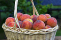 Free Peaches In A Basket Stock Photos - 6089133
