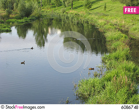 Swimming Ducks In River - Free Stock Images & Photos ...