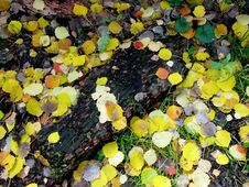 Free Colorful Leaves Royalty Free Stock Photos - 6080708